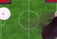 گربه پیشگوی جام جهانی ۲۰۱۸ بازی ایران و ویتنام را پیشبینی کرد (+عکس)