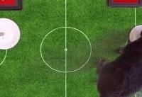 گربه پیشگو؛ ایران را برنده بازی با ویتنام اعلام کرد +عکس