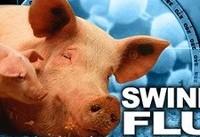شیوع آنفلوانزای خوکی در گرجستان/ تعطیلی دانشگاه ها