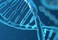 ایران در علم ژنتیک رتبه نخست منطقه را دارد