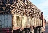 ۲۰ هزار پرونده قاچاق چوب امسال تشکیل شد