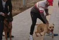 بررسی موضوع حمله دو سگ به دختر ۱۰ ساله از زبان یک حقوقدان