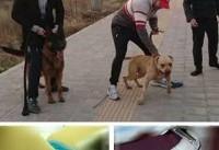 جزییات حادثه وحشتناک حمله دو سگ به دختر ۱۰ ساله در لواسان و توضیحات پلیس +عکس