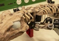 نخستین روبات ساخته شده از روی حیوان ۳۰۰ میلیون ساله (+عکس)