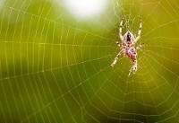 ساخت دقیقترین میکروفون جهان به کمک تار عنکبوت (+عکس)
