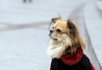 سگ گردانی در پارکهای لواسان ممنوع شد