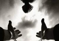 اولیای دم، فرد محکوم به قصاص را در شیراز بخشیدند