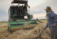 کمباین چینی به درد برداشت برنج ایرانی نمیخورد