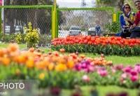 تمهیدات سازمان زیباسازی شهرداری تهران برای نوروز ۹۸