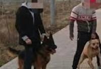 گفت و گو با صاحب سگ خطرناک لواسان / آخرین وضعیت بهار ۱۰ ساله +  عکس