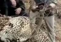 دستگیری شکارچی پلنگ در رودبار