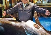 'سلطان سوشی' در ژاپن با خرید ماهی تن سه میلیون دلاری رکورد زد