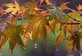 بارش باران در مرزهای خسروی و مهران