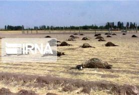 مرگ مشکوک ۱۰۷ راس گوسفند در مرودشت