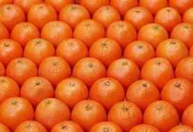 پرتقالهای نوبرانه یا رنگآمیزی سودجویانه؟!