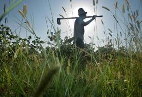 کاهش تولید کشاورزی تاثیر مستقیم بحرانهای طبیعی است