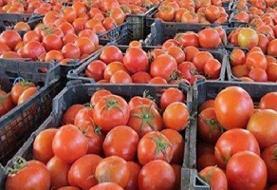 کاهش ۲۰۰۰تومانی نرخ گوجه فرنگی/روند نزولی قیمت ادامه دارد