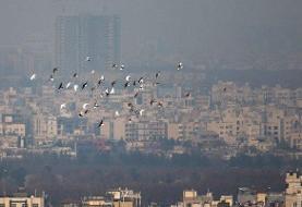 راهکارهای مقابله با آلودگی هوا/مایعات و غذای سبک مصرف شود