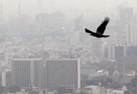 مدارس ابتدایی تهران فردا تعطیل شدند