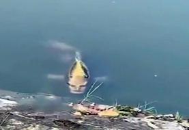 رویت ماهی انسان نما در چین!