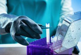 آغاز صادرات محصولات دانشبنیان سلولهای بنیادی از سال جاری