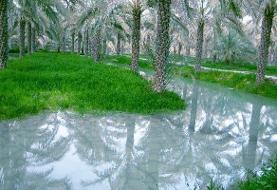 دوران آبیاری سنتی سر آمده است/ لزوم توسعه صنایع تبدیلی خرما