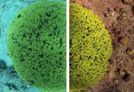 الگوریتمی جدید و شگفتانگیز برای ایجاد تصاویر رنگی و واضح از موجودات زیردریایی +تصاویر