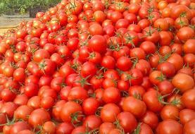 دلایل گران شدن | گوجه ۱۲ هزار تومانی نخرید؛ ارزان میشود