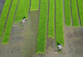 پیش بینی صرفه جویی ۳۰ درصدی مصرف آب با افزایش مواد آلی خاک