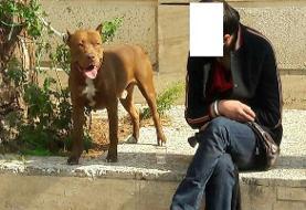 حمله سگ «پیتبول» به شهروندان/سگ و صاحبش بازداشت شدند
