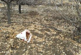 وقوع شکار در مناطق آزاد آرادان/ ۲ لاشه قوچ کشف شد