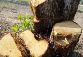تشکیل پرونده قضایی برای متهمان پرونده قطع درختان کهنسال ارتفاعات بومهن