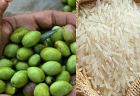 راهاندازی آزمایشگاه مرجع برنج، چای و زیتون در گیلان