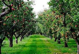 از بینبردن نوعی آفت درختان سیب و گلابی با ترکیب ۳ گیاه بومی