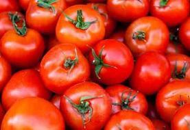 کاهش قیمت گوجه فرنگی از فردا