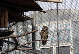 احداث زیستگاه های ویژه پرندگان در فاز دوی باغ پرندگان تهران