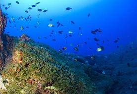 دسترسی به بیش از ۵ میلیارد رکورد دادههای دریایی امکانپذیر شد