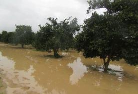 ۲۶۴ میلیارد تومان اعتبار برای خسارتدیدگان بخش کشاورزی