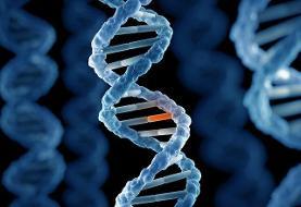 اخذ نمونه ژنتیک از ۹۰هزار مجرم/ تشکیل پروفایل ژنتیکی برای مشاغل حساس و پرخطر