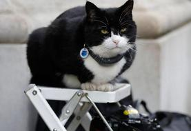 Palmerston, the Foreign Office cat, returns to work after six months off for stress