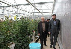 مشکلی در حوزه کالاهای اساسی استان تهران وجود ندارد