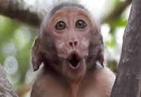 میمونها هنگام خطر اطلاعرسانی میکنند