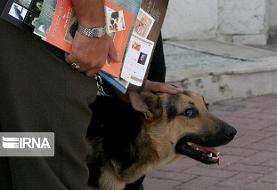 سگآزار به تبعید محکوم شد