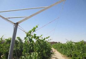 ۱۰ هزار هکتار از باغهای قزوین فوق مدرن شدهاند
