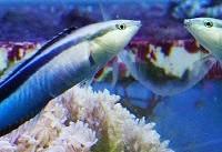 ماهیهایی که خود را در آینه میشناسند