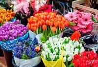 تولیدات هلند ایران پشت دروازه بازارهای جهانی