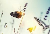 کاهش حشرات و خطر ویرانی طبیعت
