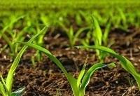 راهاندازی مرکز رشد مشترک پارکفناوری همدان و مرکز تحقیقات کشاورزی
