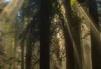 روزشمار هفته منابع طبیعی اعلام شد