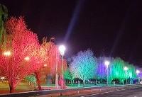 آلودگی نوری، عامل مرگ تدریجی درختان ولیعصر